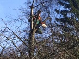 Steiger im Baum